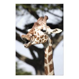 Funny faced reticulated giraffe, San Francisco Photo Print
