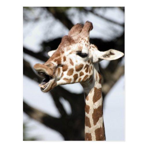 Funny faced reticulated giraffe, San Francisco Postcard
