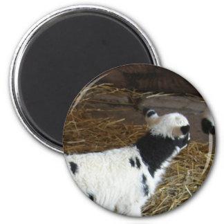 Funny Face's Lamb Magnet