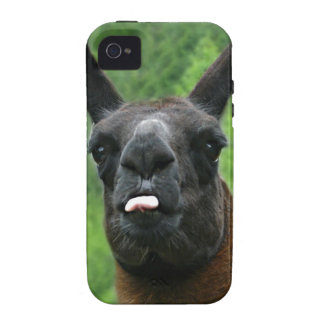 Funny Farm Animal with Attitude Photo Case-Mate iPhone 4 Cases