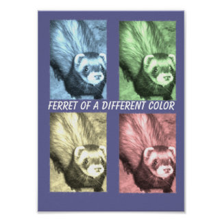 Funny Ferrets Poster