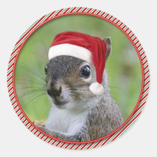 Funny Florida Santa Squirrel™ Wearing Santa Hat Classic Round Sticker