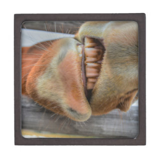 Funny Friendly Horse Muzzle and Teeth Premium Gift Boxes