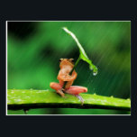 "Funny Frog afraid of water Postcard<br><div class=""desc"">Animal card showing a funny frog is afraid of water</div>"