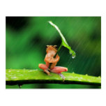 Funny Frog afraid of water Postcard
