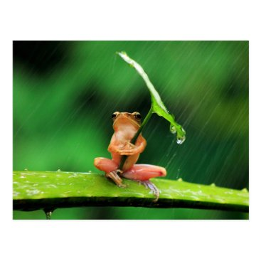 Suaithai Funny Frog afraid of water Postcard