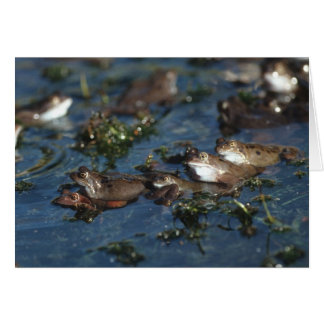 Funny frogs greeting card