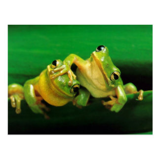 Funny Frogs Post Card