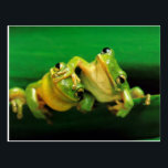 "Funny Frogs Postcard<br><div class=""desc"">Cute Green Frogs</div>"