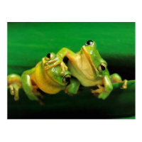 Funny Frogs Postcard