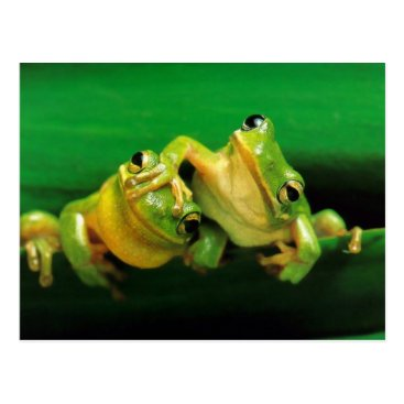 Beach Themed Funny Frogs Postcard