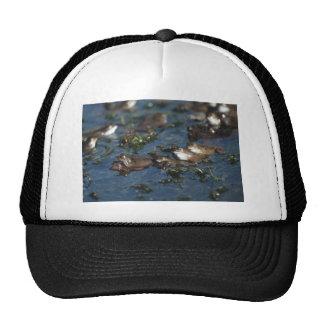 Funny frogs trucker hat
