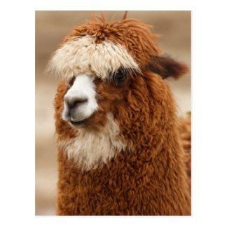 Funny Fuzzy Llama Postcard