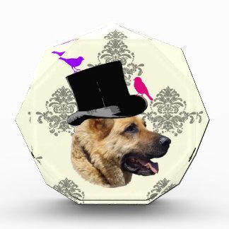 Funny German shepherd dog Award