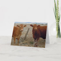 Funny Get Well - Red Cow Animal Humor - Ranch Card