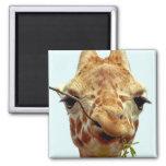 funny giraffe baby magnet