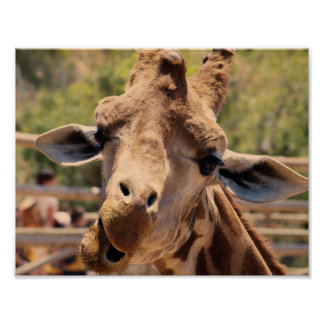 Funny giraffe poster