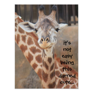 Funny Giraffe Poster (16x12) not easy being cute!