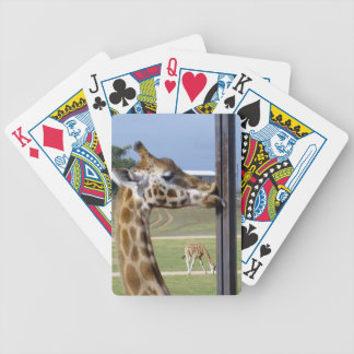 Funny Giraffe Pucker Up Those Lips, Bicycle Playing Cards