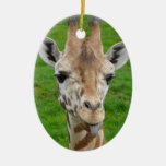 Funny Giraffe Sticking Out Tongue! Double-Sided Oval Ceramic Christmas Ornament