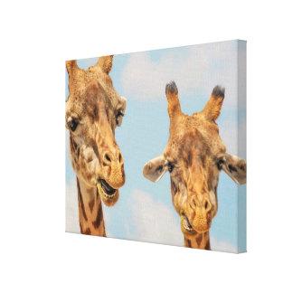 Funny Giraffes Canvas Print