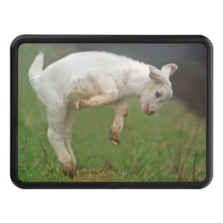 Funny Goat Baby White Goat Jumping in Pasture Hitch Cover