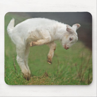 Funny Goat Baby White Goat Jumping in Pasture Mouse Pad
