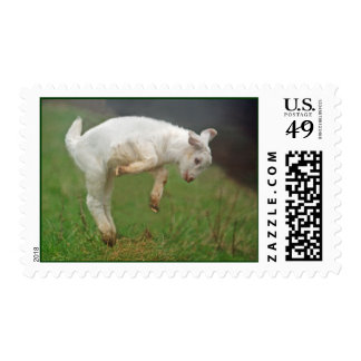 Funny Goat Baby White Goat Jumping in Pasture Stamp