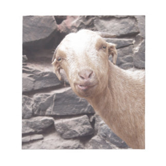 Funny Goat Memo Notepads