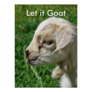 Funny Goat Parody, Cute Goat Kid Poster