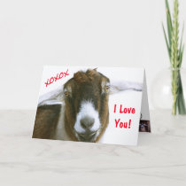 Funny Goat Valentine's Day Holiday Card