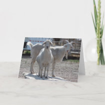 Funny Goats Anniversary Congratulations Compliment Card