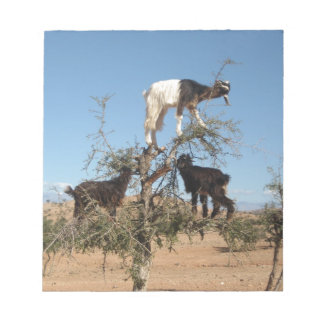 Funny goats in a tree scratch pads