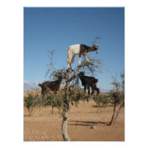 Funny goats in a tree poster