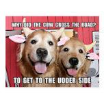 Funny Golden Retriever Cow Joke Postcard