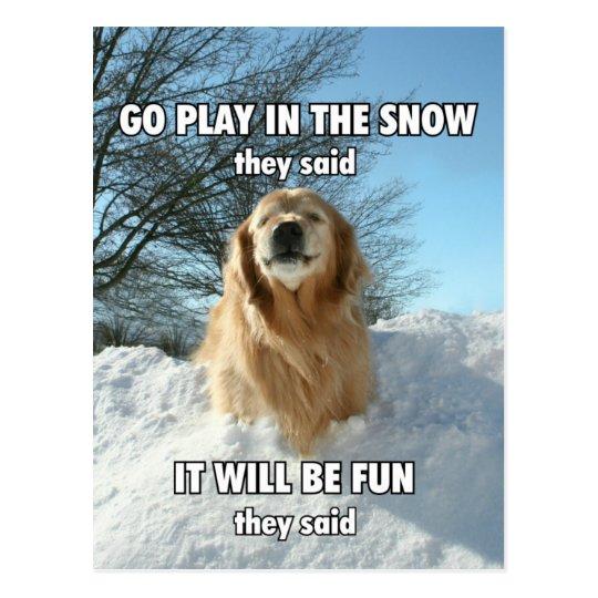 Funny Golden Retriever Go Play In The Snow Meme Postcard Zazzle