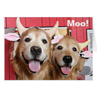 Funny Golden Retrievers in Cow Costumes Halloween Card