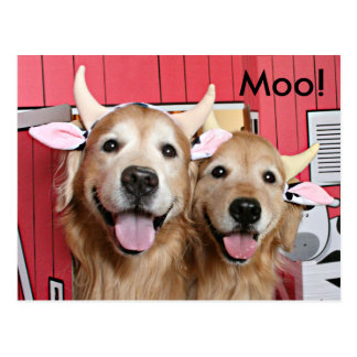 Funny Golden Retrievers in Cow Costumes Halloween Postcard