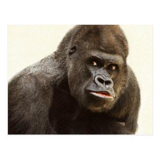 Funny Gorilla postcard