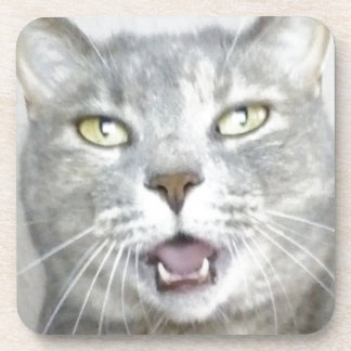 funny gray cat fluffy hilarious open mouth meow drink coasters