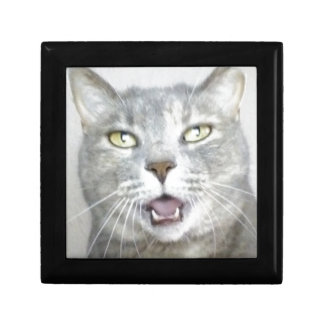 funny gray cat fluffy hilarious open mouth meow jewelry box