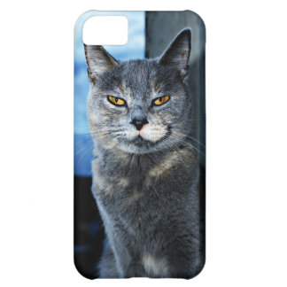 Funny grinning grey cat iPhone 5C covers