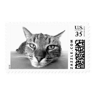 Funny Grumpy Tabby Cat Kitty Stamp