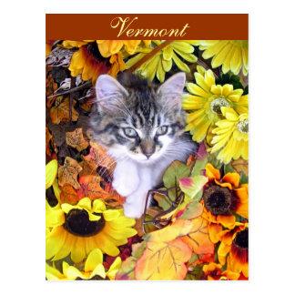 Funny Halloween Kitty Cat Kitten, Holiday Season Postcard