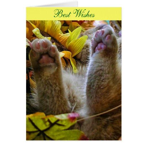 Funny Halloween Kitty Cat Kitten Sleeping, Paws Up Card