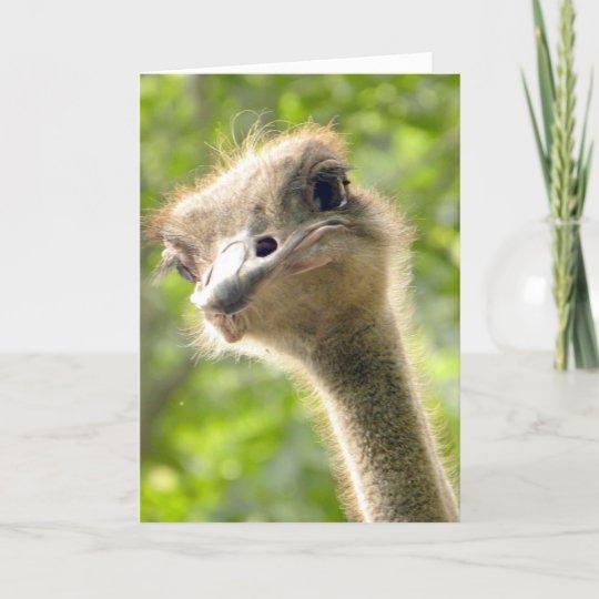Funny Happy Birthday Card L Ostrich Photography Zazzle