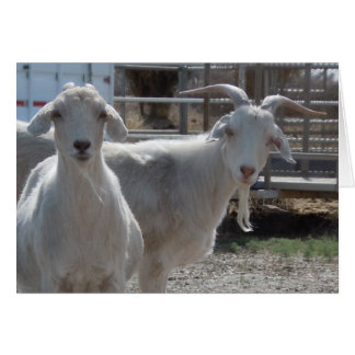 Funny Happy Birthday Goats Greeting Card