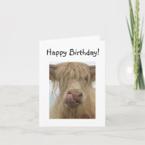 Funny Highland Cow Birthday Card