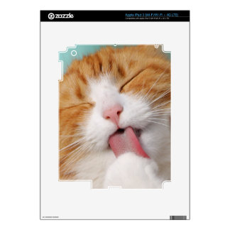 Funny hilarious silly cat iPad 3 skins