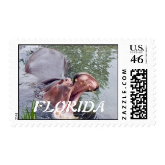 Funny Hippopotamus Photography Stamps